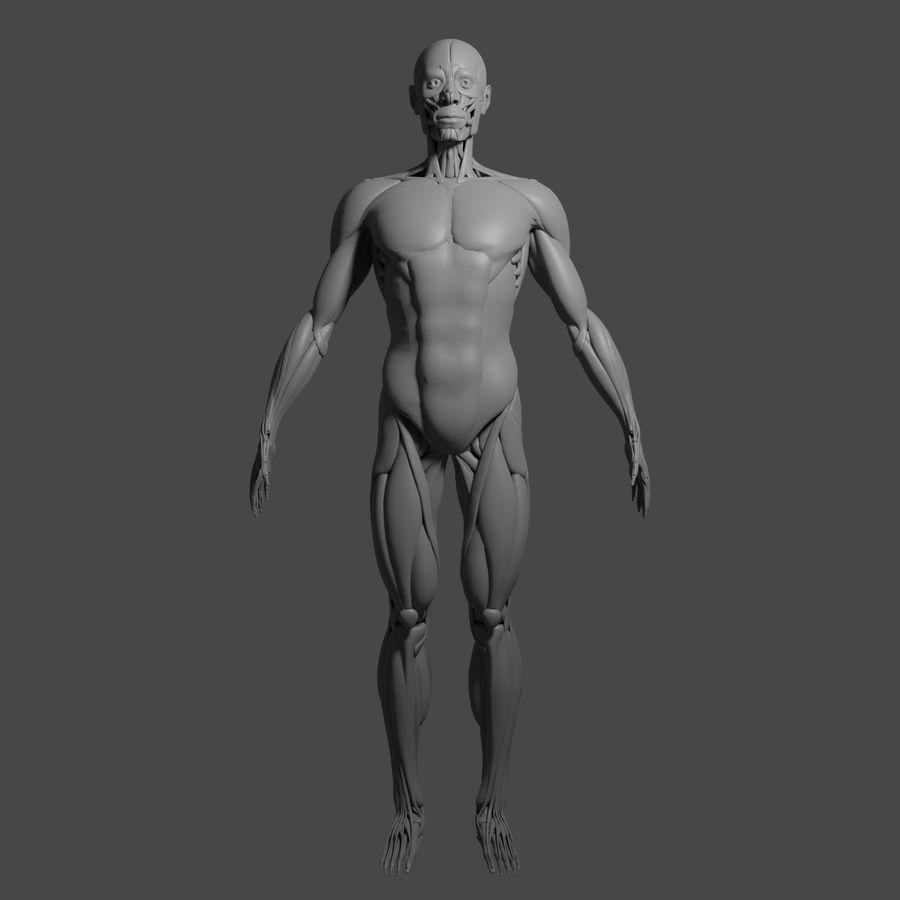 解剖学3 d moedl royalty-free 3d model - Preview no. 11