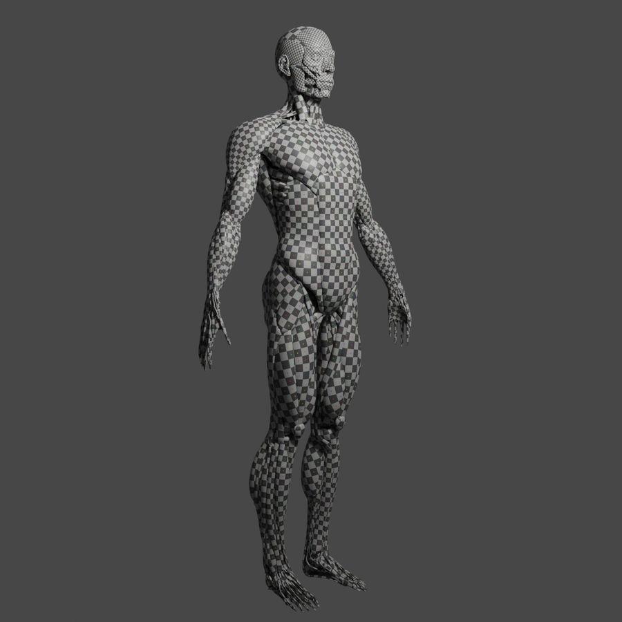 解剖学3 d moedl royalty-free 3d model - Preview no. 14