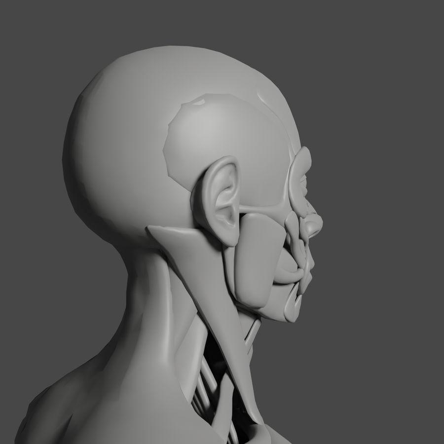 解剖学3 d moedl royalty-free 3d model - Preview no. 7