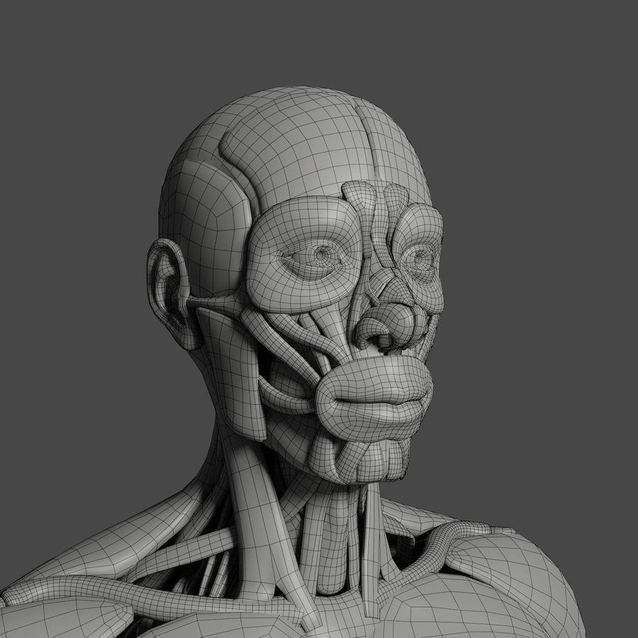 解剖学3 d moedl royalty-free 3d model - Preview no. 4