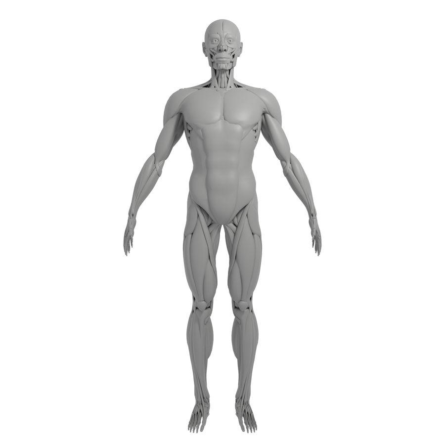 解剖学3 d moedl royalty-free 3d model - Preview no. 1