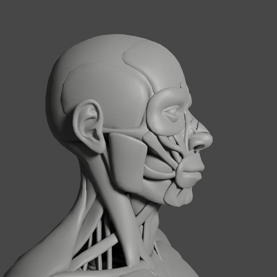 解剖学3 d moedl royalty-free 3d model - Preview no. 5