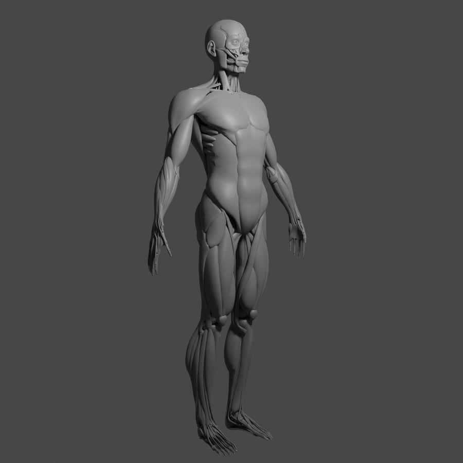 解剖学3 d moedl royalty-free 3d model - Preview no. 12