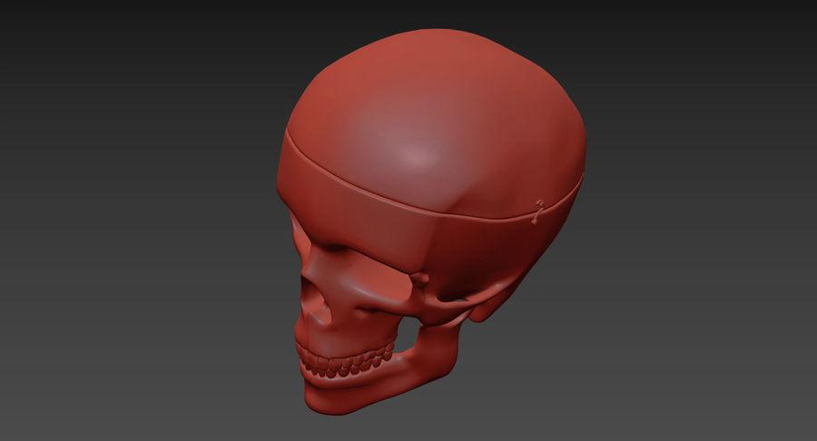 Modèle anatomique de crâne royalty-free 3d model - Preview no. 21