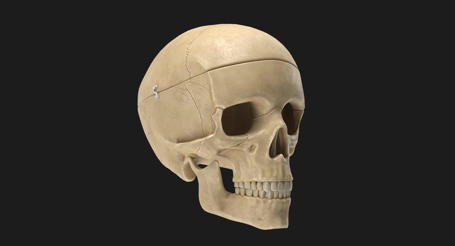 Modèle anatomique de crâne royalty-free 3d model - Preview no. 3