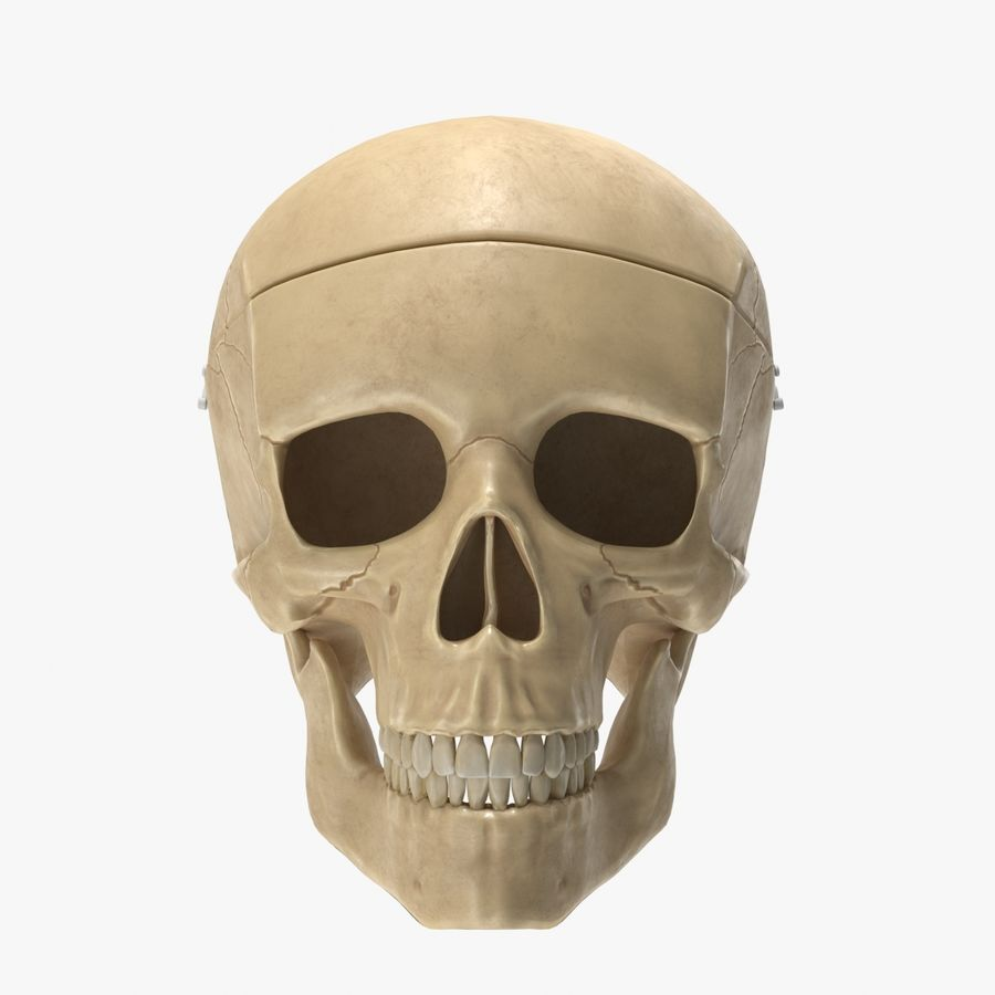 Modèle anatomique de crâne royalty-free 3d model - Preview no. 1