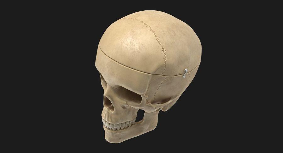 Modèle anatomique de crâne royalty-free 3d model - Preview no. 8