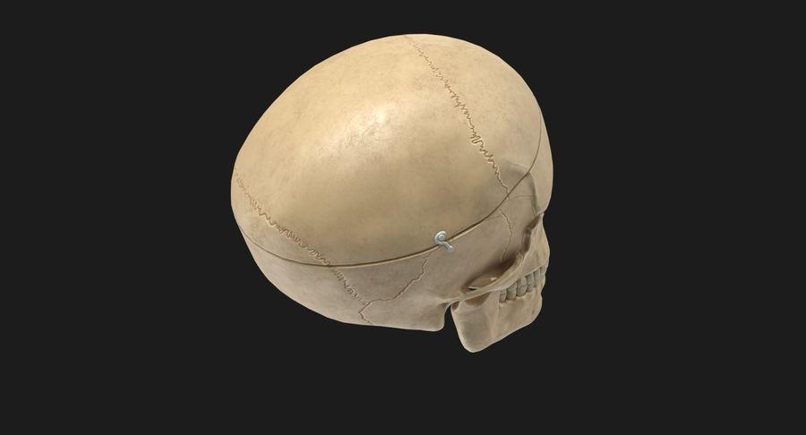 Modèle anatomique de crâne royalty-free 3d model - Preview no. 9