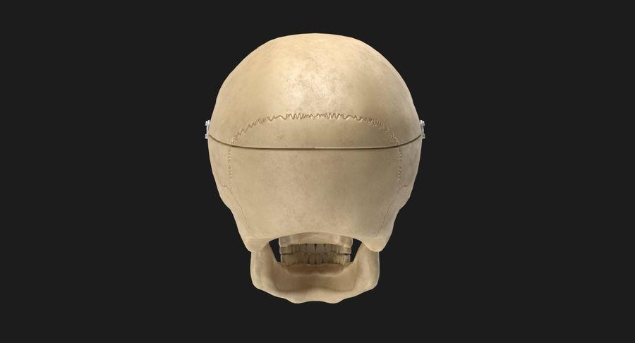 Modèle anatomique de crâne royalty-free 3d model - Preview no. 5