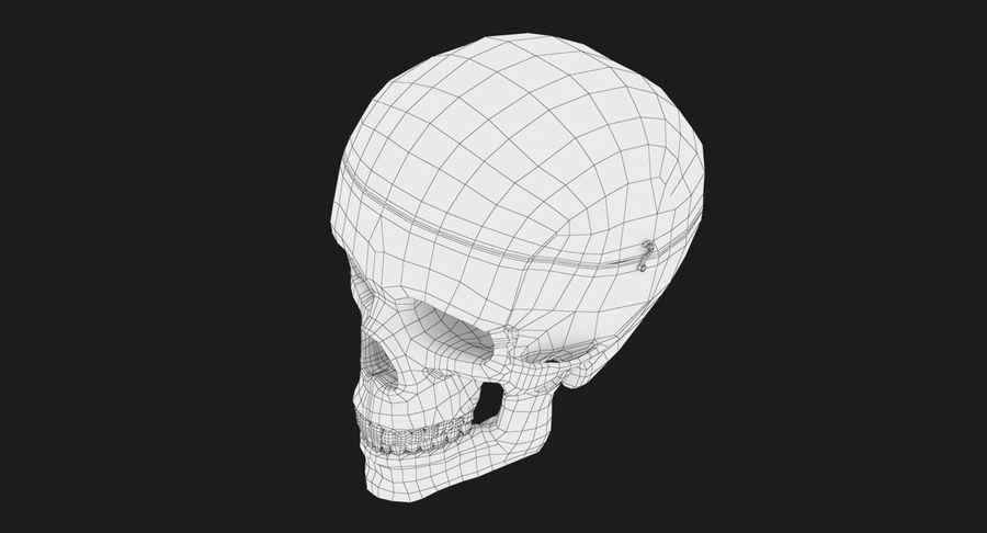 Modèle anatomique de crâne royalty-free 3d model - Preview no. 17