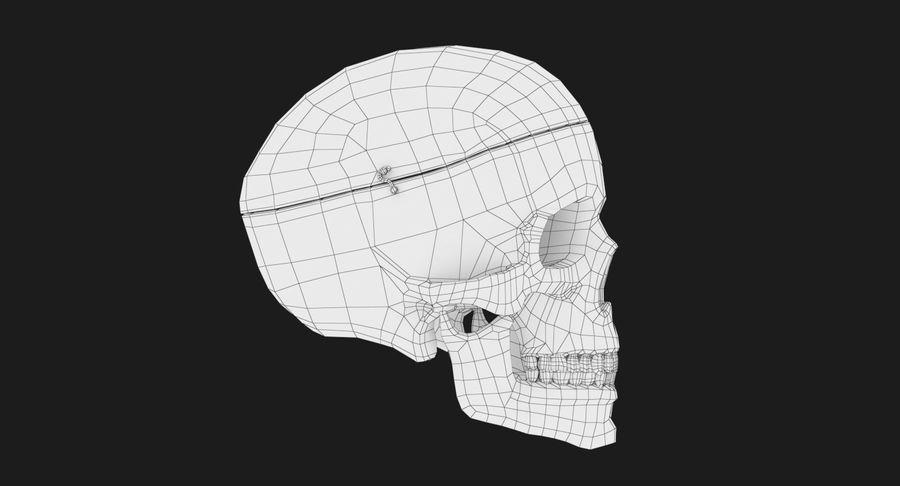Modèle anatomique de crâne royalty-free 3d model - Preview no. 13