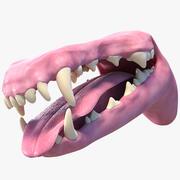 개 입 3d model