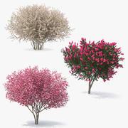 灌木丛和树木开花3D模型集合 3d model