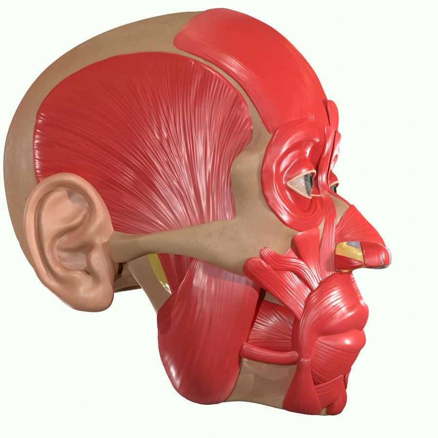 Anatomie musculaire de la tête complète royalty-free 3d model - Preview no. 21