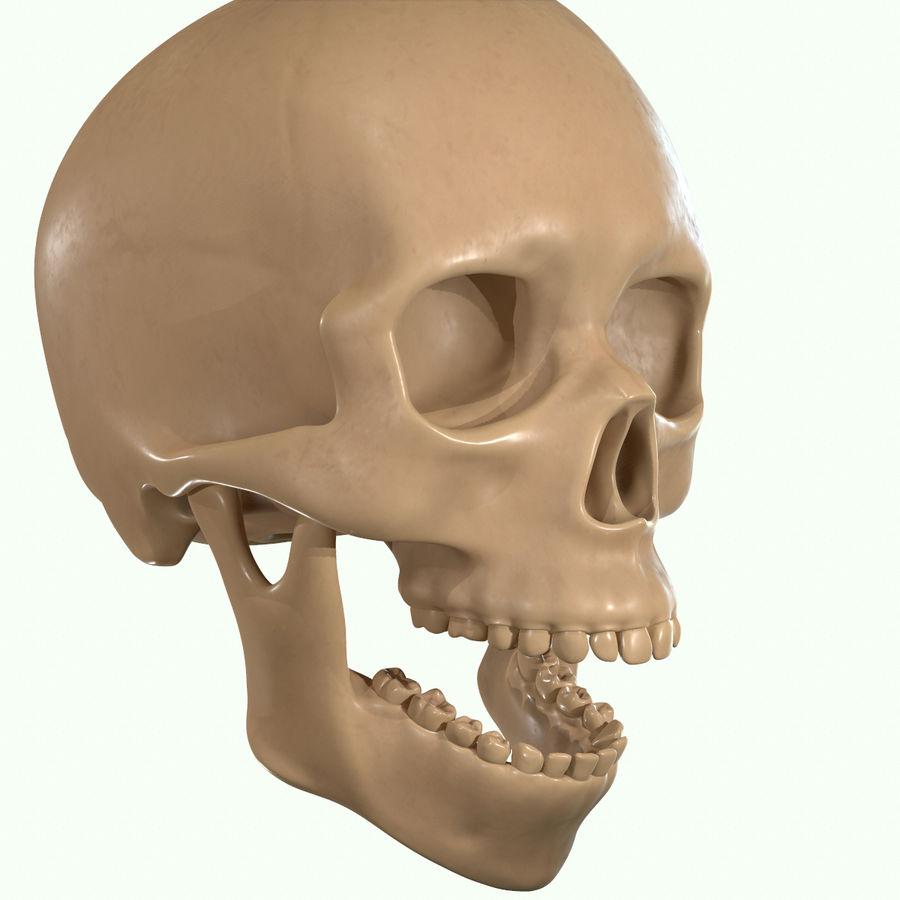 Anatomie musculaire de la tête complète royalty-free 3d model - Preview no. 49