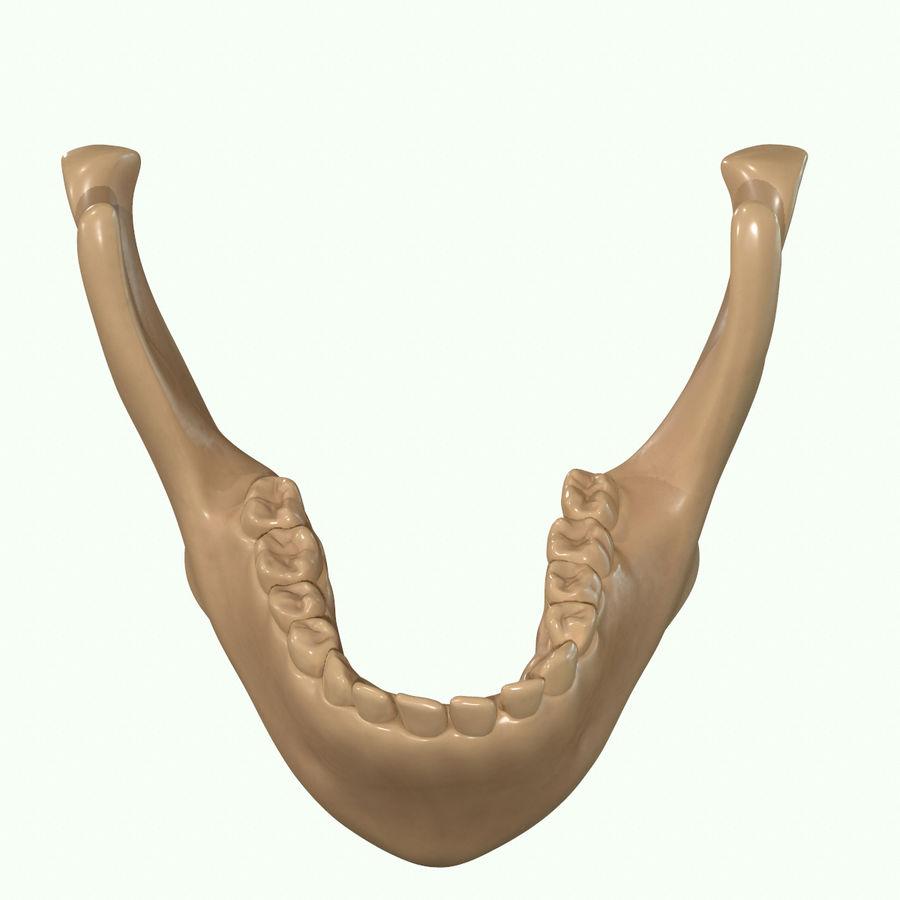 Anatomie musculaire de la tête complète royalty-free 3d model - Preview no. 65