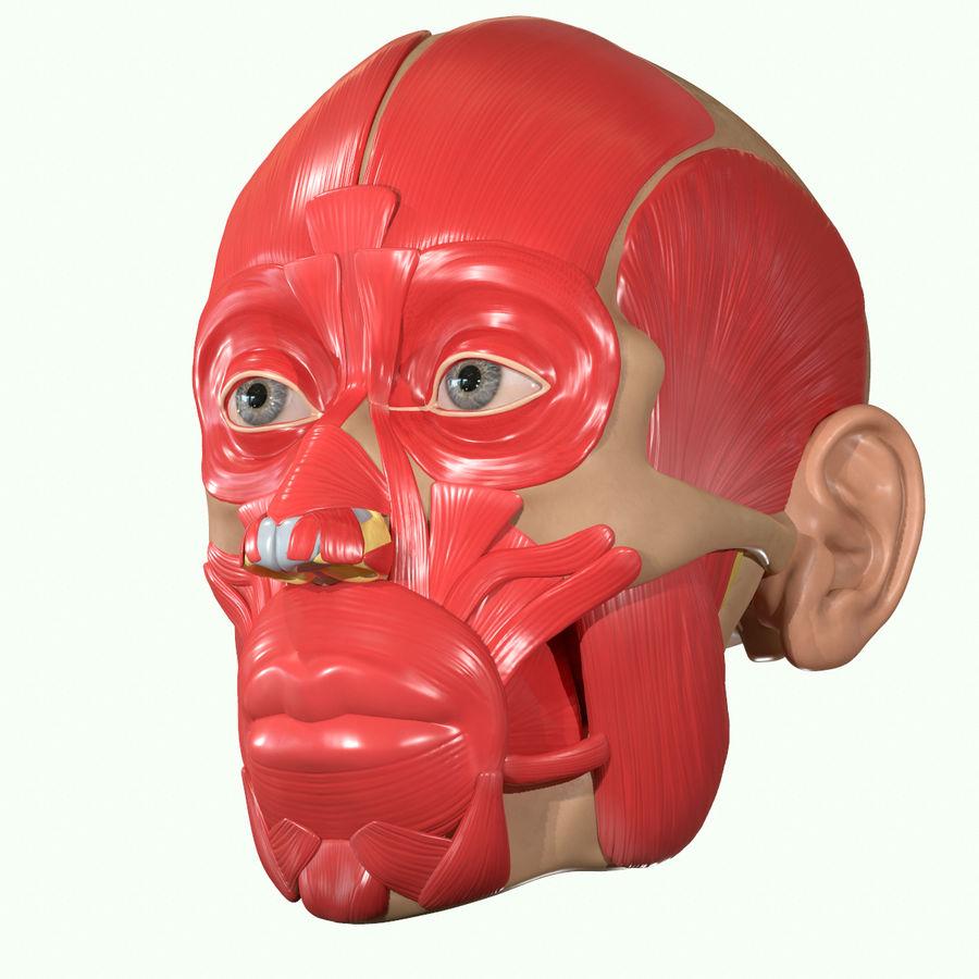 Anatomie musculaire de la tête complète royalty-free 3d model - Preview no. 27