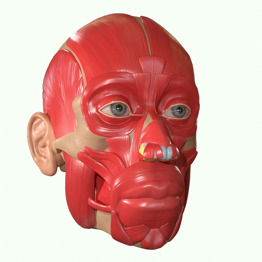 Anatomie musculaire de la tête complète royalty-free 3d model - Preview no. 26