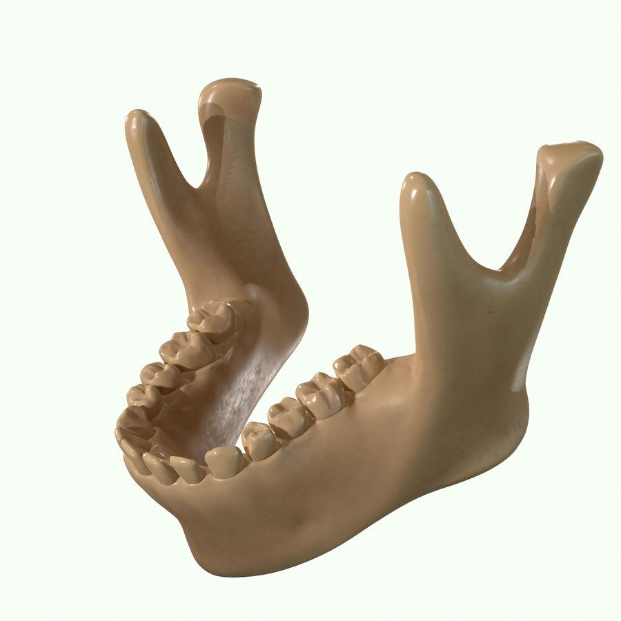 Anatomie musculaire de la tête complète royalty-free 3d model - Preview no. 62