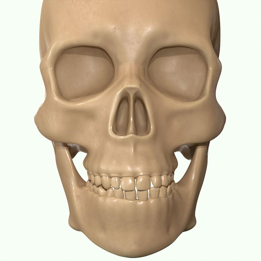 Anatomie musculaire de la tête complète royalty-free 3d model - Preview no. 41