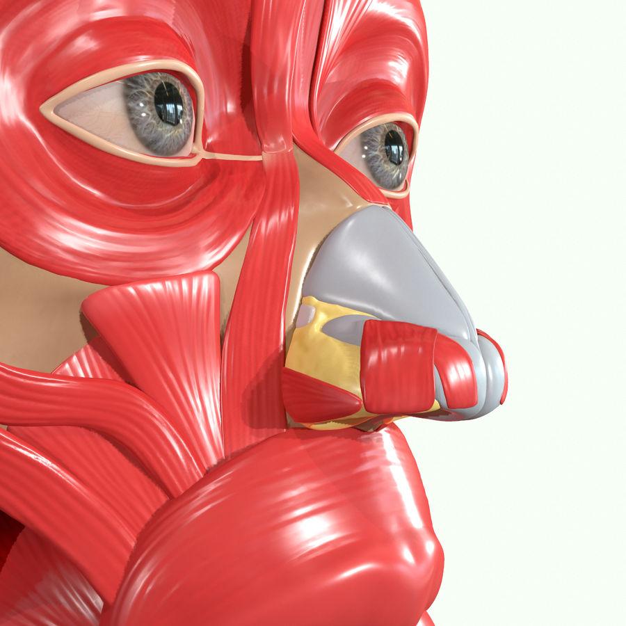 Anatomie musculaire de la tête complète royalty-free 3d model - Preview no. 29