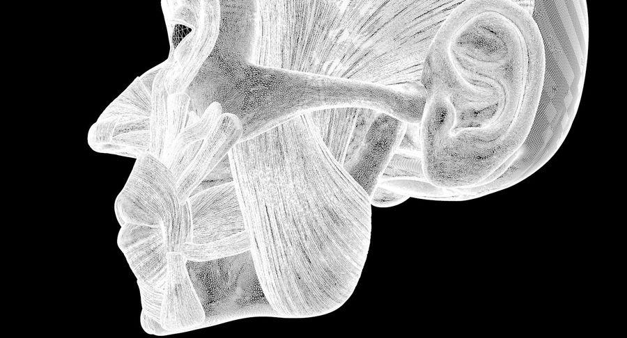 Anatomie musculaire de la tête complète royalty-free 3d model - Preview no. 72