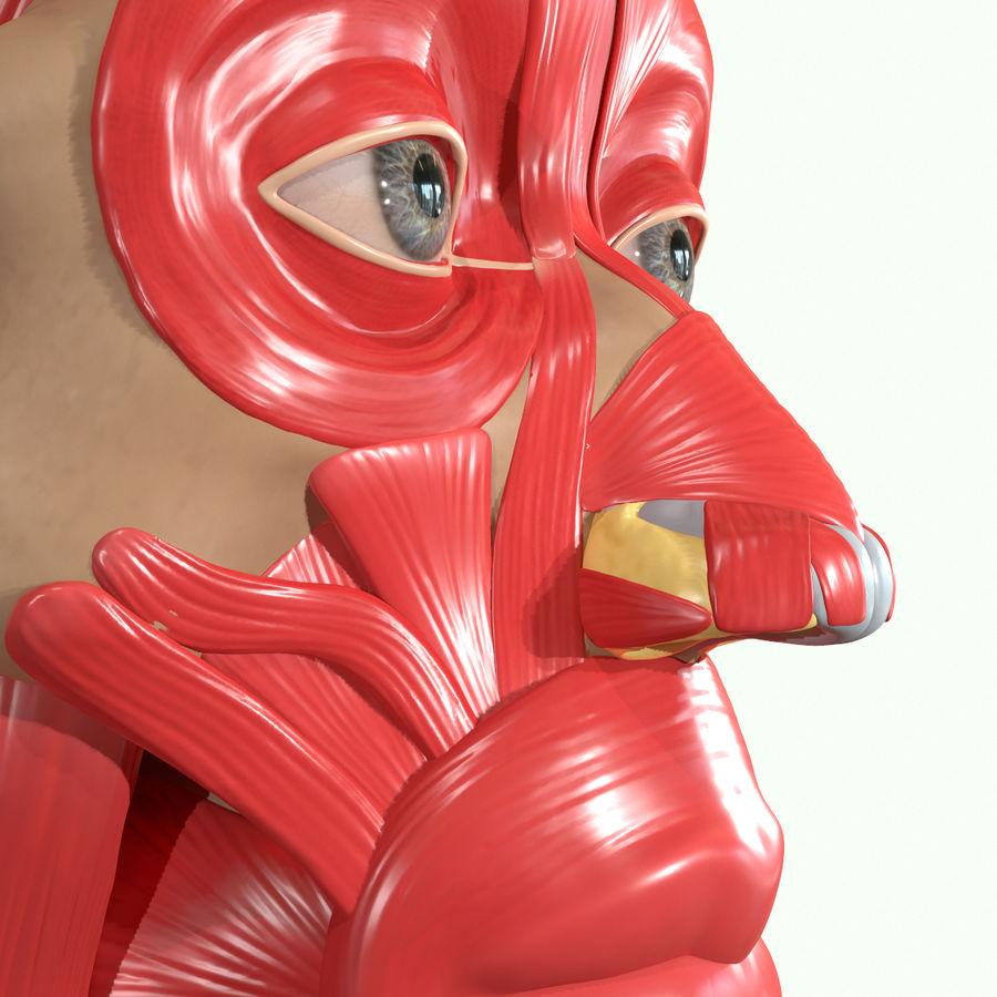 Anatomie musculaire de la tête complète royalty-free 3d model - Preview no. 28