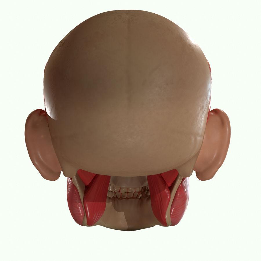 Anatomie musculaire de la tête complète royalty-free 3d model - Preview no. 36