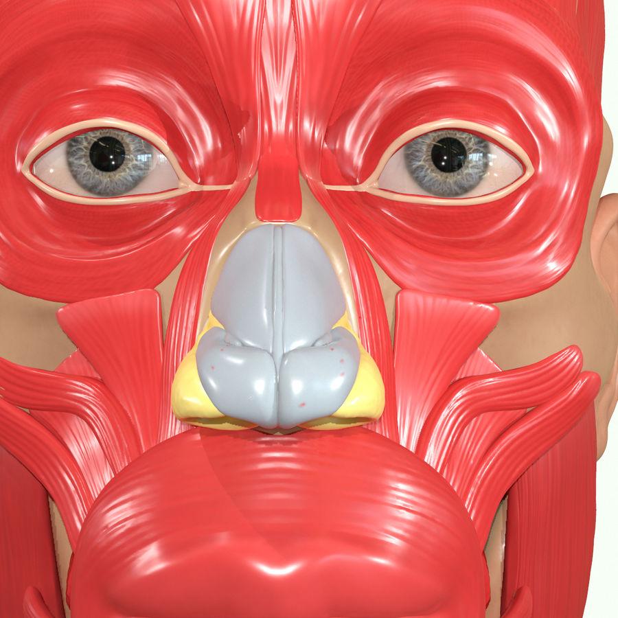 Anatomie musculaire de la tête complète royalty-free 3d model - Preview no. 31