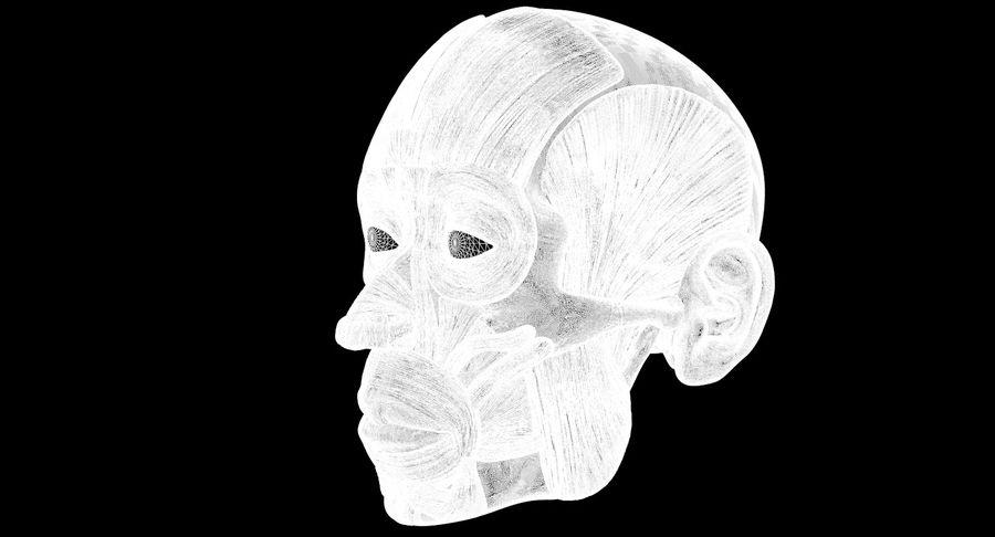 Anatomie musculaire de la tête complète royalty-free 3d model - Preview no. 13