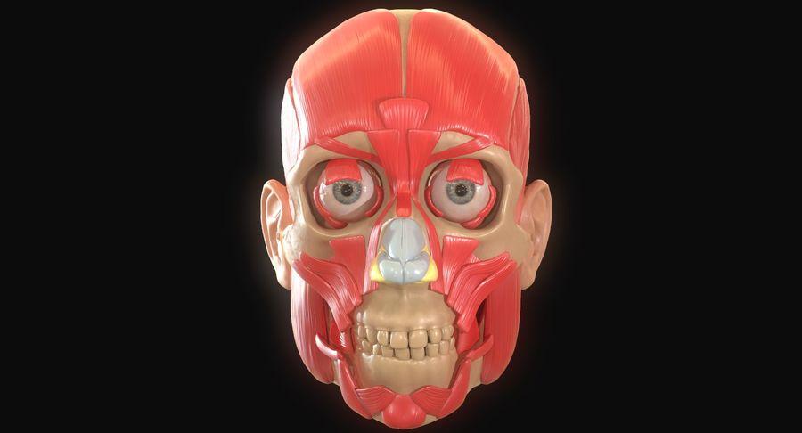 Anatomie musculaire de la tête complète royalty-free 3d model - Preview no. 11