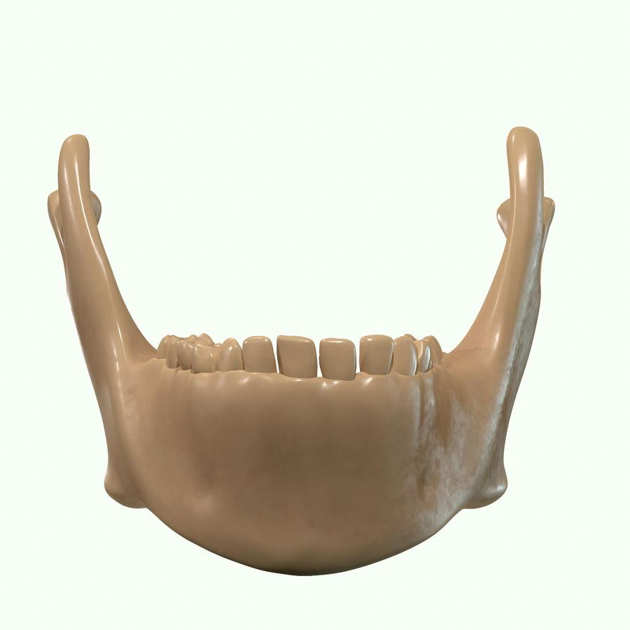 Anatomie musculaire de la tête complète royalty-free 3d model - Preview no. 68