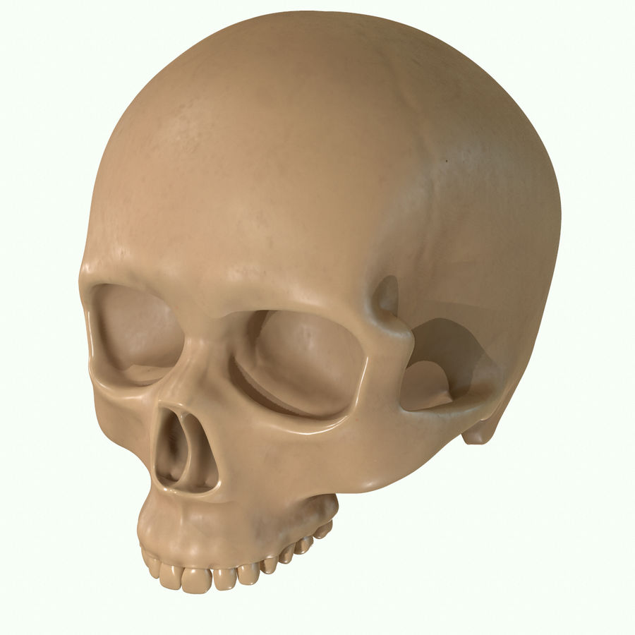 Anatomie musculaire de la tête complète royalty-free 3d model - Preview no. 58