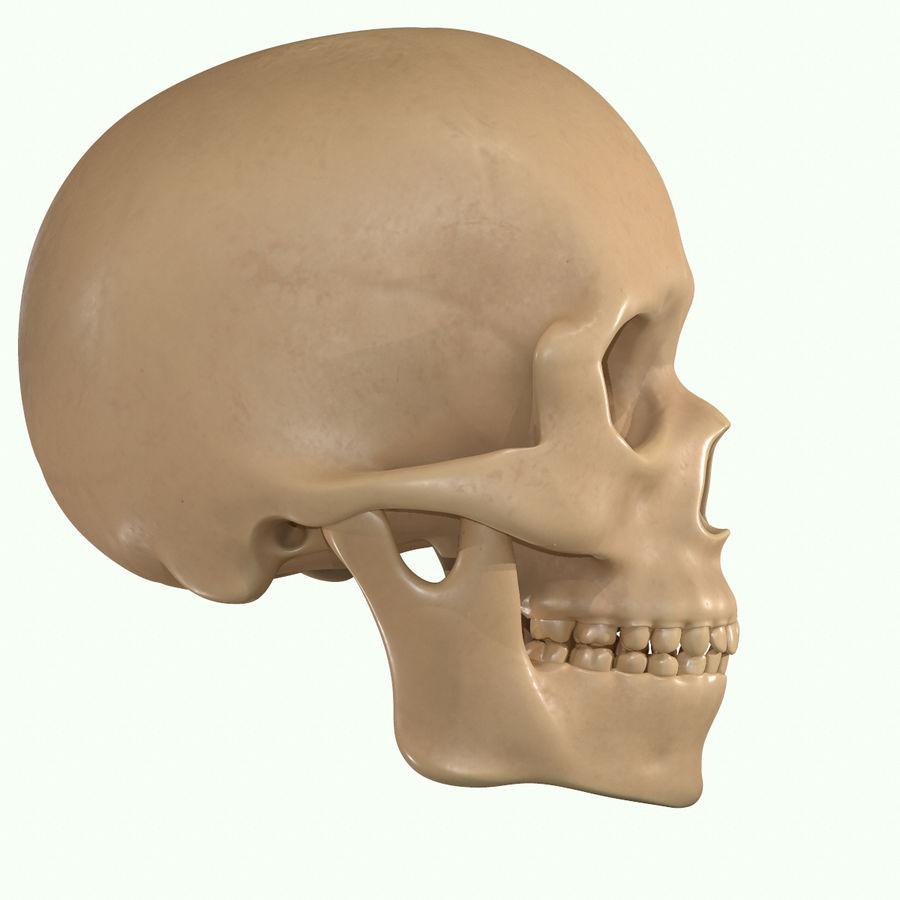Anatomie musculaire de la tête complète royalty-free 3d model - Preview no. 43