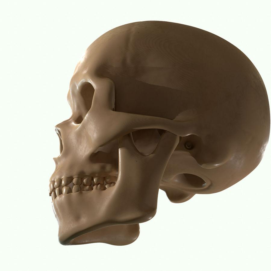 Anatomie musculaire de la tête complète royalty-free 3d model - Preview no. 44