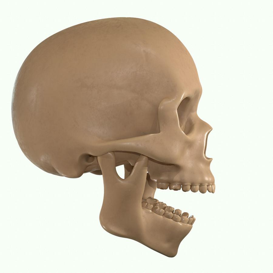 Anatomie musculaire de la tête complète royalty-free 3d model - Preview no. 48