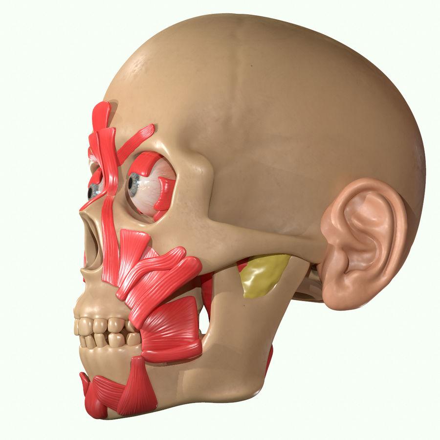 Anatomie musculaire de la tête complète royalty-free 3d model - Preview no. 34