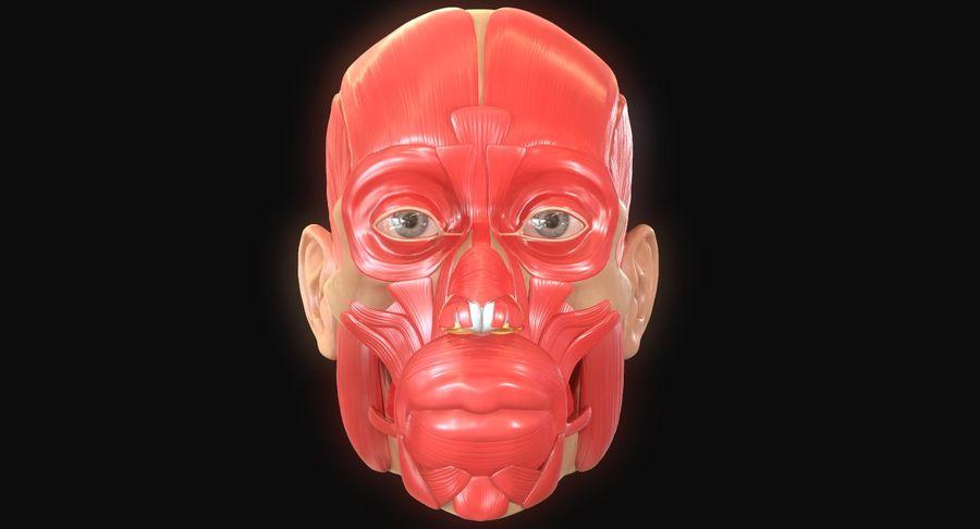 Anatomie musculaire de la tête complète royalty-free 3d model - Preview no. 7