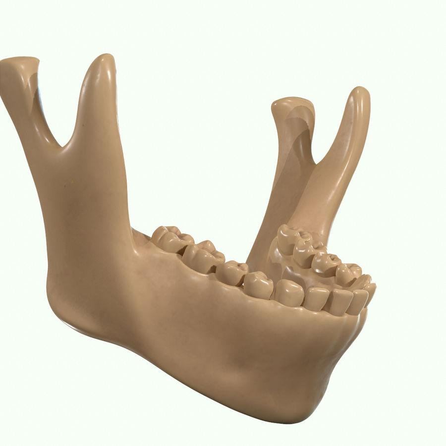Anatomie musculaire de la tête complète royalty-free 3d model - Preview no. 63