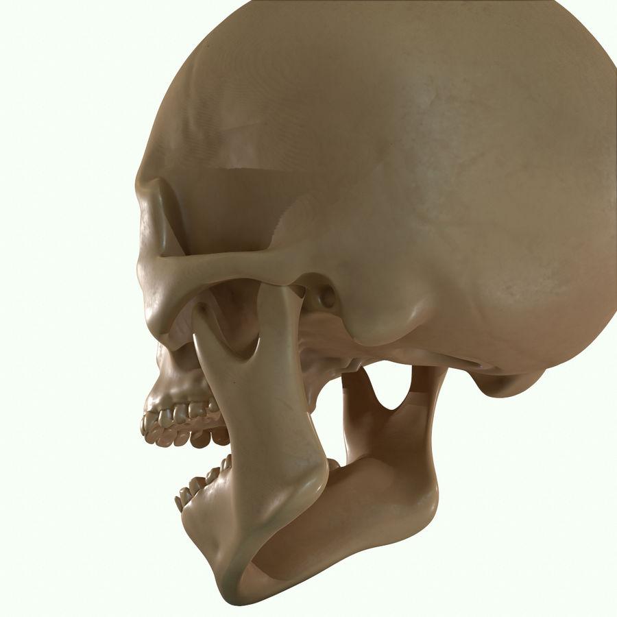 Anatomie musculaire de la tête complète royalty-free 3d model - Preview no. 50
