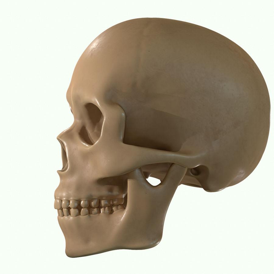 Anatomie musculaire de la tête complète royalty-free 3d model - Preview no. 38
