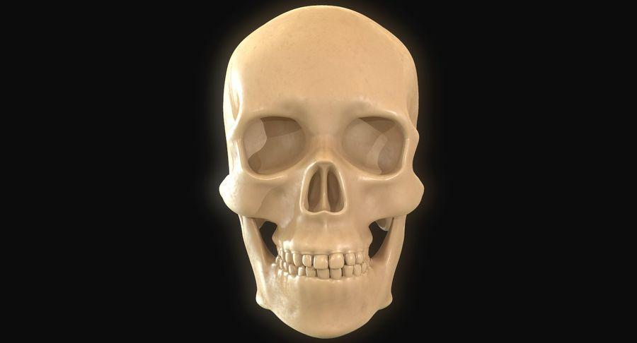 Anatomie musculaire de la tête complète royalty-free 3d model - Preview no. 12