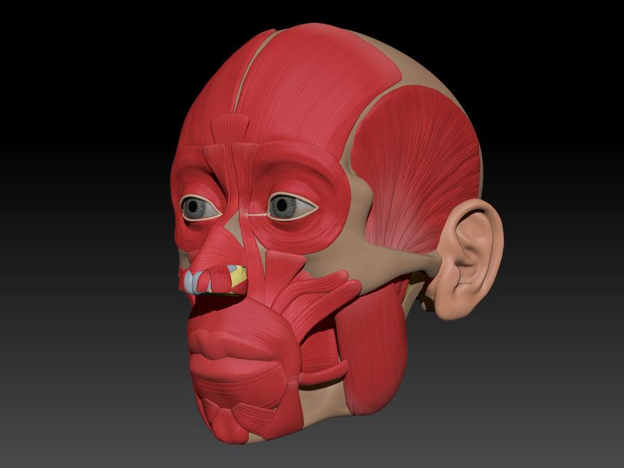 Anatomie musculaire de la tête complète royalty-free 3d model - Preview no. 75