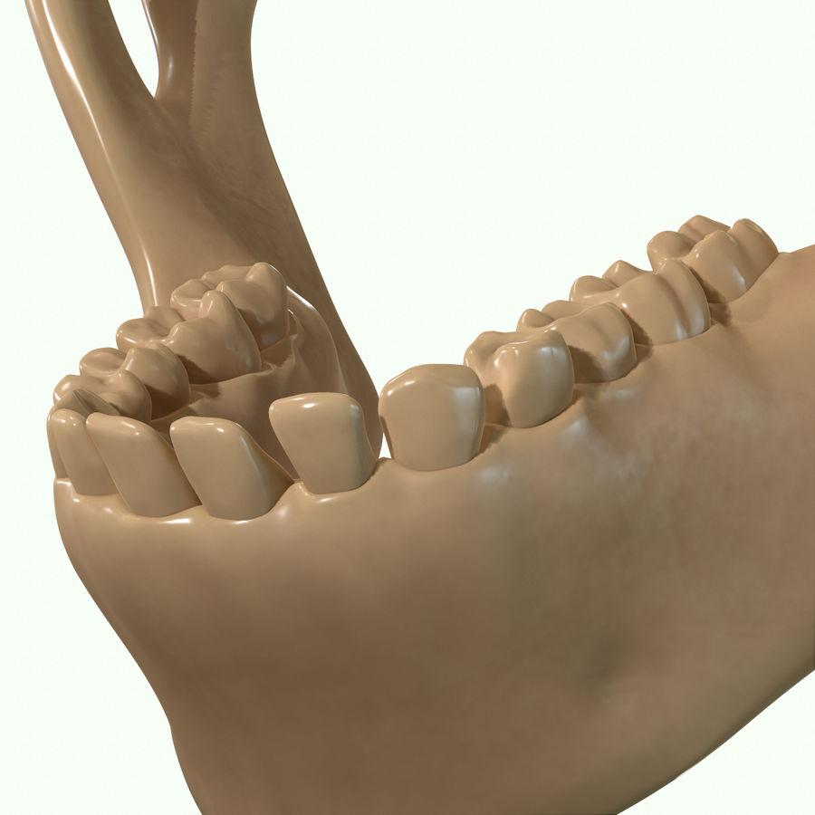 Anatomie musculaire de la tête complète royalty-free 3d model - Preview no. 64