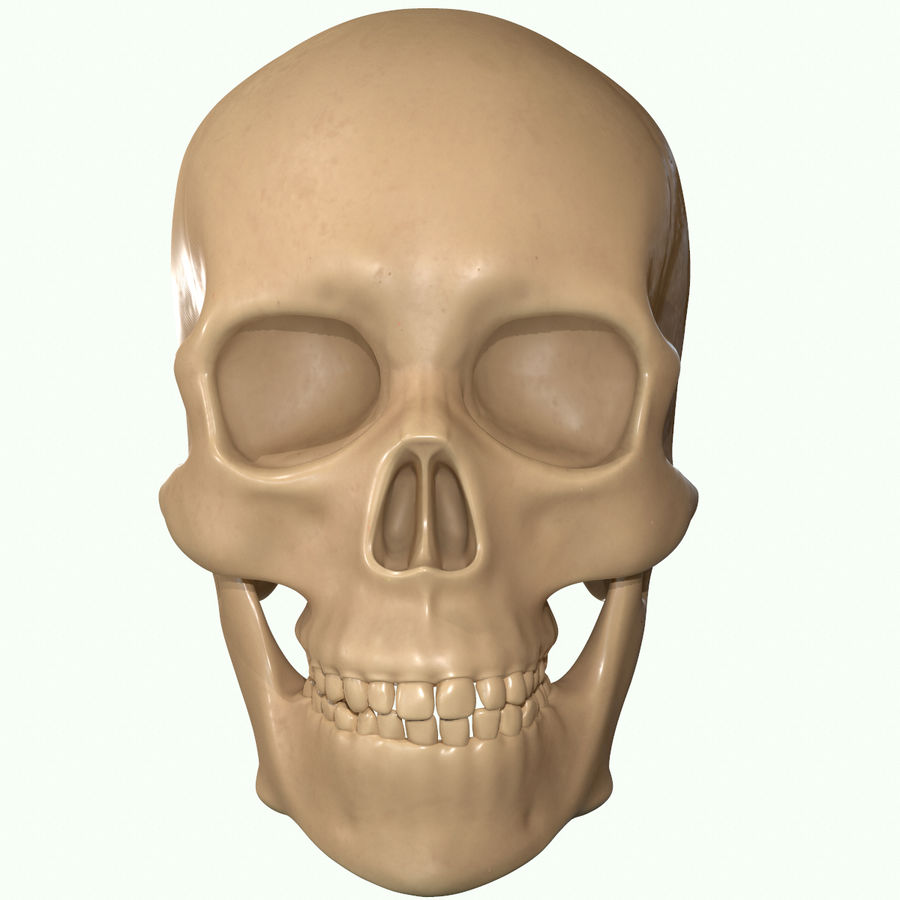 Anatomie musculaire de la tête complète royalty-free 3d model - Preview no. 20