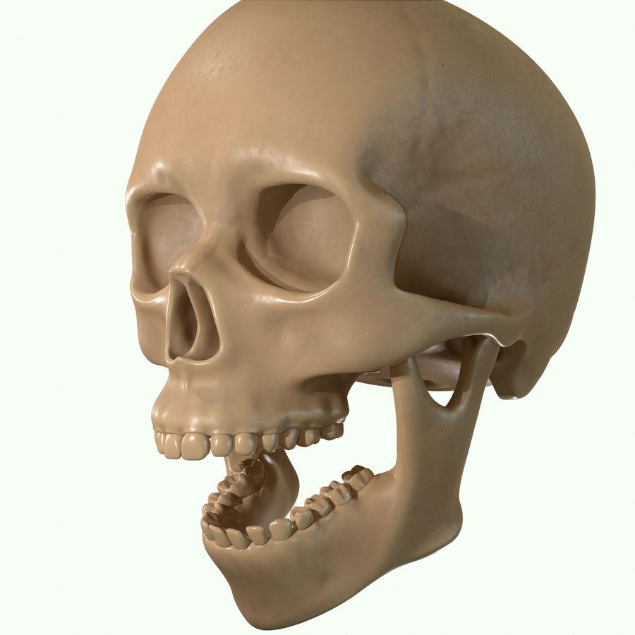 Anatomie musculaire de la tête complète royalty-free 3d model - Preview no. 45