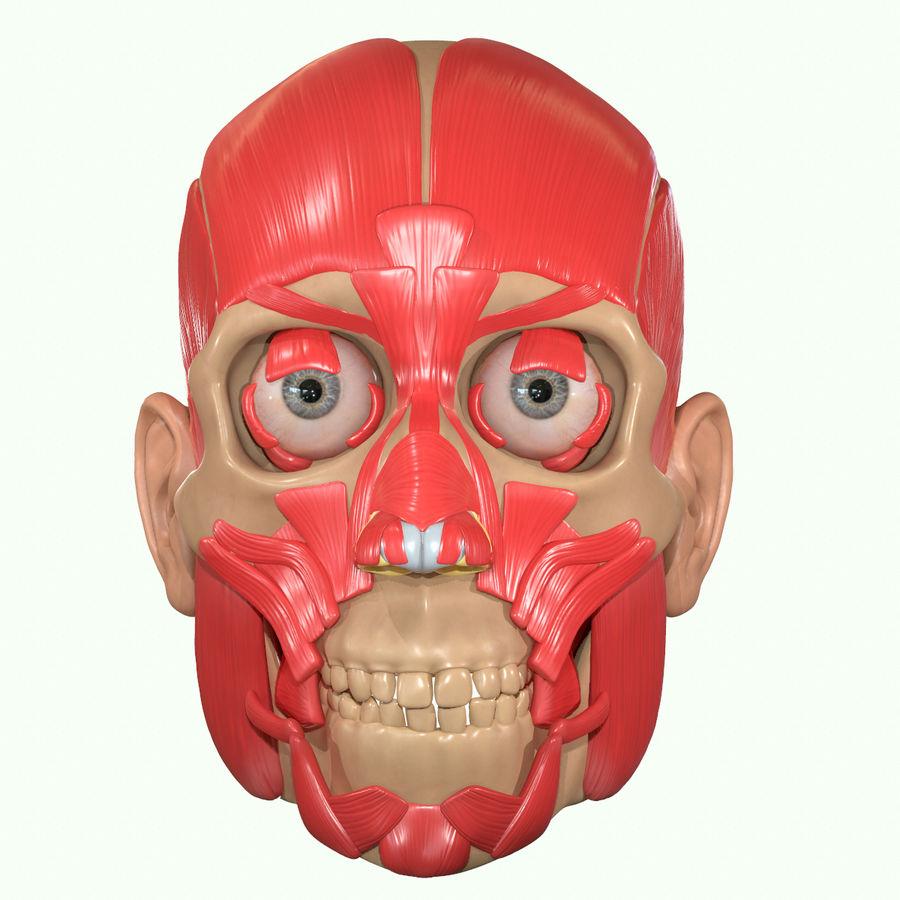 Anatomie musculaire de la tête complète royalty-free 3d model - Preview no. 17