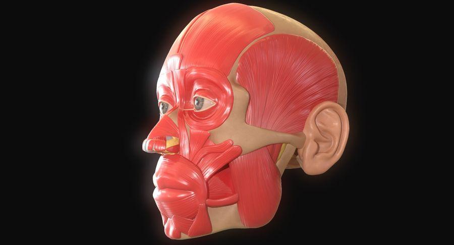 Anatomie musculaire de la tête complète royalty-free 3d model - Preview no. 8
