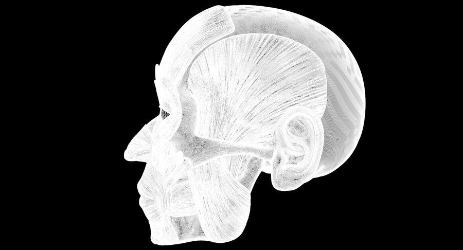Anatomie musculaire de la tête complète royalty-free 3d model - Preview no. 14