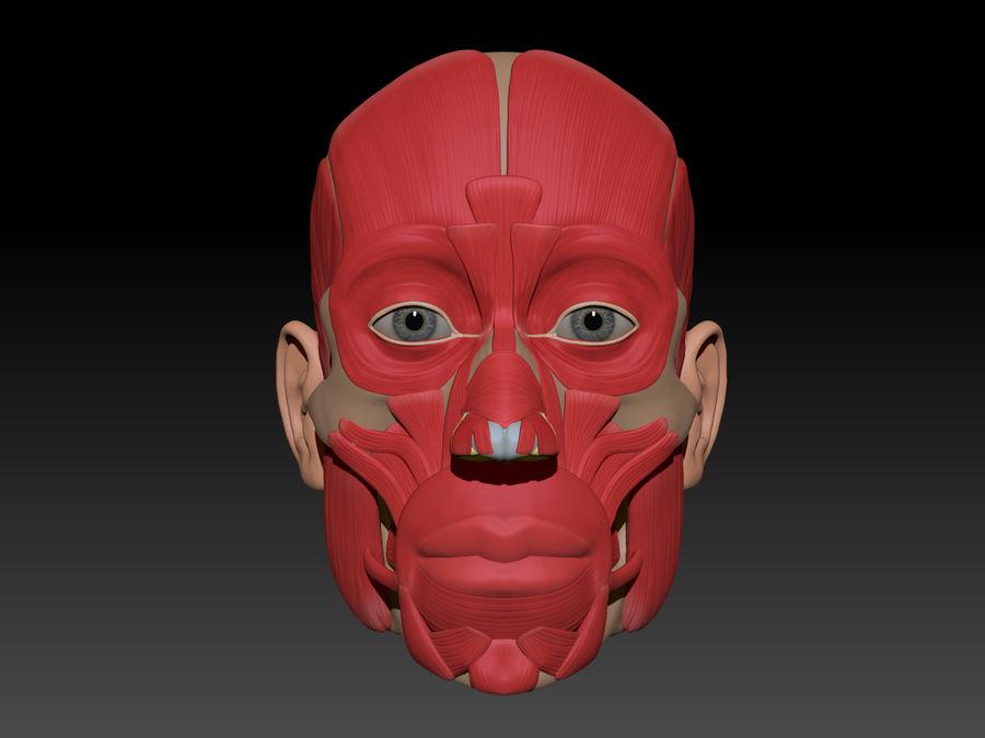 Anatomie musculaire de la tête complète royalty-free 3d model - Preview no. 74